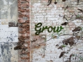 Moos Graffiti Grow